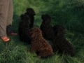 puppies [1024x768].jpg
