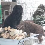 Pomagamy nosić drewno