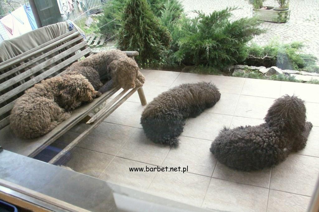 Barbety z Gorki Podduchownej (2)