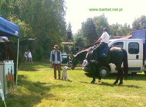 Barbet Polar z koniem