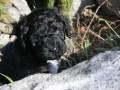 Walk puppies Barbet (5).JPG