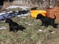 spacer Puppies 001 [1280x768].JPG